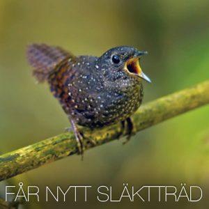 Nytt släktträd för alla världens småfågelsfamiljer presenteras