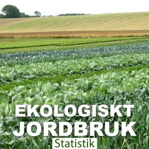 Blott 20% av jordbruksmarken brukas ekologiskt