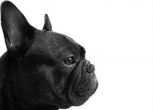 Generna påverkar valet att skaffa hund