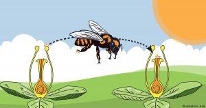NATUR | Tusentals räddningsinsatser över hela landet för att rädda bina