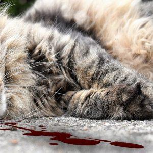 Enligt redaktör'n: Men för katten, se till att värna katten!