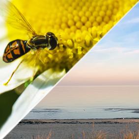 Tips från Naturskyddsföreningen nu när vildbina vilar