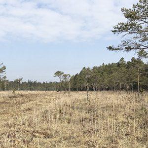 NATUR   Länet får två helt nya naturreservat och Florarna får sitt skydd stärkt