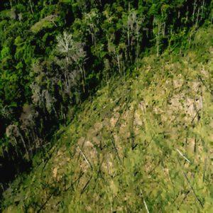 Skövlingen av Amazonas når nya rekordnivåer