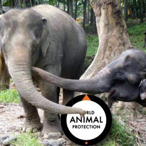 VÄRLDEN | Following Giants, en ny elefantvänlig turistattraktion i Thailand