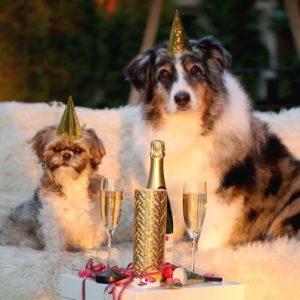 Nära 2 av 3 djurägare stannar hemma med sitt husdjur på nyårsafton