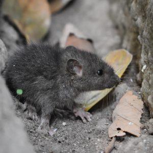 TIPS & RÅD | Med kylan kommer skadedjuren – så undviker man dem