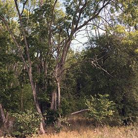 Nytt stadsnära naturreservat i länet