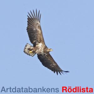 Positivt för två av tre svenska landskapsdjur