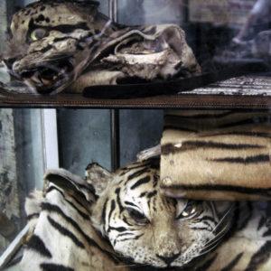 WWF välkomnar Kinas beslut att förbjuda konsumtion av vilda djur