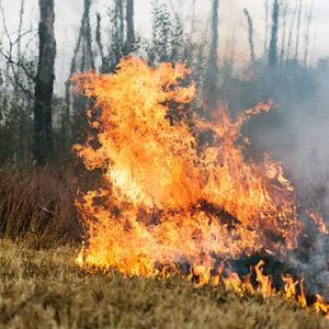 OBS! | Risk för gräsbrand