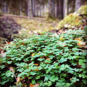 NATUR | Sveriges sätt att beräkna skyddad natur är strängast i EU