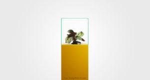 KULTUR | Sätter fokus på överkonsumtionen med hjälp av en blomma