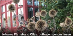 FOTO   Johanna Färnstrand Ollas: Luthagen genom linsen