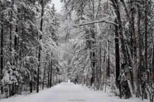 TRAFIK | Digital vinterväglagsdata ger ökad säkerhet och framkomlighet
