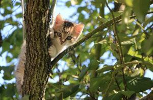 HUSDJUR | Katter fortsätter förgiftas av musmedel trots skärpta regler