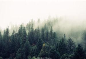 WWF: Offra inte den biologiska mångfalden för ökad skogsproduktion