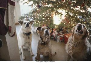 SÄLLSKAPSDJUR | Ny donation till SLU:s hundcancerforskning