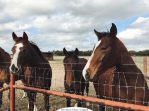 SLU: Sverige koordinerar nytt europeiskt referenscenter avseende djurvälfärd