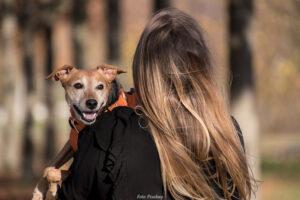 STUIDE | Hundars diabetes kan visa på ökad risk för deras ägare att utveckla typ 2-diabetes