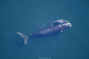 HAVSMILJÖ | Södra Teneriffa utnämnd till Europas första djurvänliga valskådningsområde