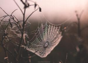 VETENSKAP | Så kan vi spinna trådar som är ännu starkare än spindlarnas