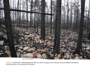 NATUR | Så påverkades ekosystemet av den stora skogsbranden i Västmanland