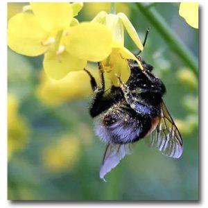 Visa omsorg om våra pollinerare