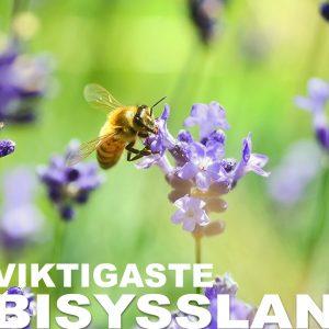Låt pollinerarna bli en rolig bisyssla