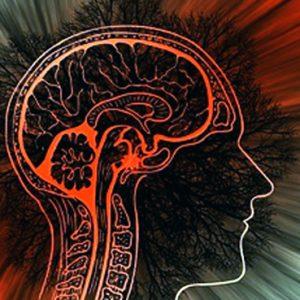 HJÄRNAN: Neurotransmittorsystem kartläggs med endast ett experiment