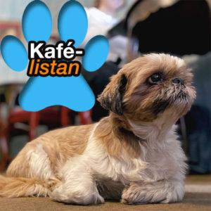 HUNDENS KAFÉLISTA: Gismo tipsar om hundvänliga kaféer och konditorier