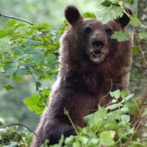 NATUR | Västra Balkans rika djurliv får ökat skydd med svenskt bistånd