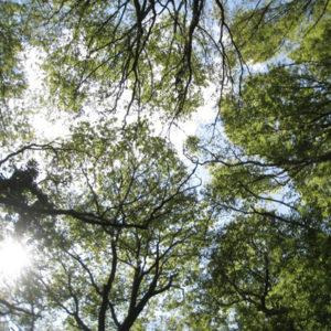 NATUR | Trädkronorna skyddar livet i skogen från den globala uppvärmningen