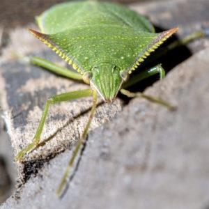 ENTOMOLOGI | Nordliga insekter lika känsliga för klimatförändringar som tropiska