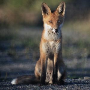 NATURFILM | Se WWF:s film från den Biologiska mångfaldens dag