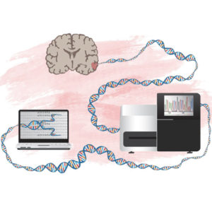 FORSKNING & VETENSKAP | Ny metod att identifiera gener som kan driva hjärntumörer
