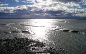EVOLUTIONEN | Kraftiga tidvatten kan ha drivit på fiskarnas utveckling mot ett liv på land