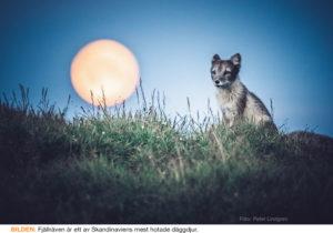 DJUR & NATUR | Populationerna av vilda ryggradsdjur har i snitt gått ned med 68 procent