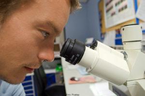 FORSKNING | AI-metoder för analys av sociala nätverk hittar nya celltyper i vävnad