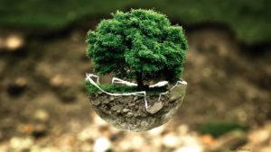 MILJÖ | Åtta nominerade till WWF-priset Årets miljöhjälte 2020