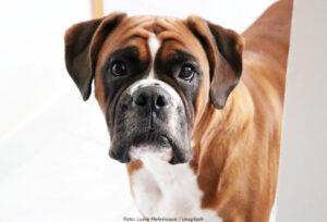 DJUR | Miljondonation till SLU för hundcancerforskning