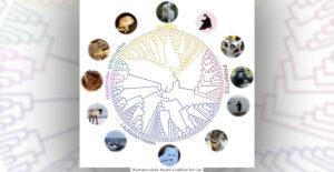 FORSKNING | 240 däggdjur hjälper oss att förstå människans arvsmassa