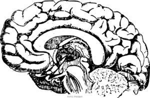 MEDICIN | Nyutvecklad metod visar stor potential för behandling av Alzheimers sjukdom