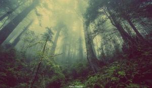 NATUR | Arterna har ofta svårt att hänga med när klimatet förändras