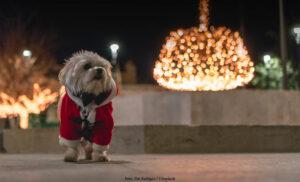TIPS & RÅD | 8 av 10 husdjur får julklapp i år