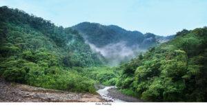 KLIMAT & MILJÖ | Genetisk forskning ska hjälpa regnskogar klara klimatförändringar