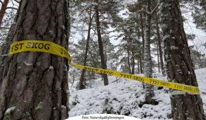 NATUR | Ny kampanj visar hur den svenska skogen tystnar