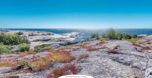 MILJÖ | Naturskyddsföreningen: Mycket bra med ny havsmiljölag