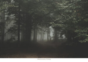 KLIMAT • MILJÖ | Ökat tryck på skogen ingen lösning för klimatet