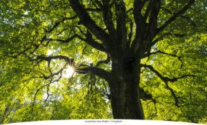 SAMHÄLLE | Städernas träd viktiga för miljö och ekonomi